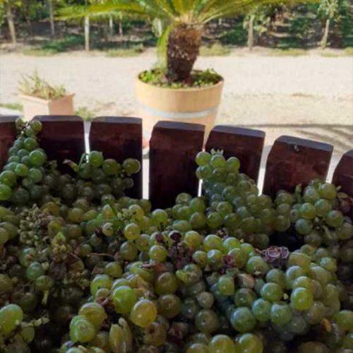 Négociant en vin producteur vendanges vignobles Gaucher